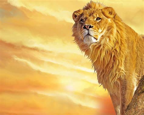 wallpapere animale leu