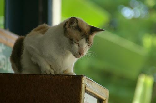 Temple Cat 2