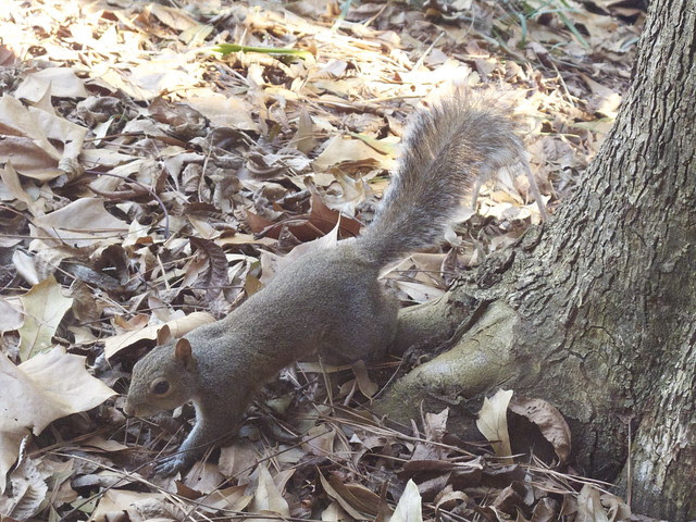 Nilla and the Squirrel 0014