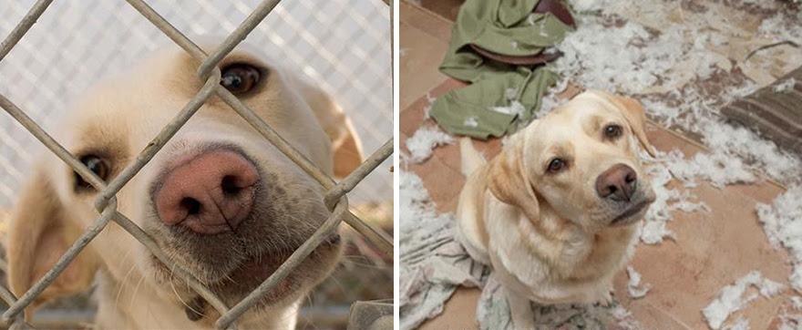 Antes e depois de serem adotados