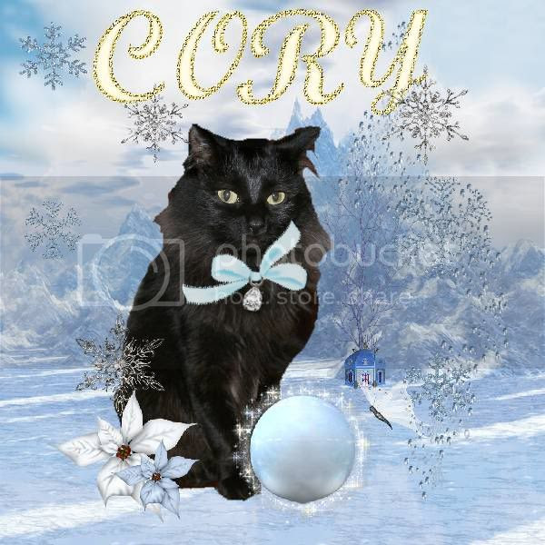 House Panther,Black Cat,Domestic Cat,Snow,Snowcats Project,Winter,Holiday Glitter