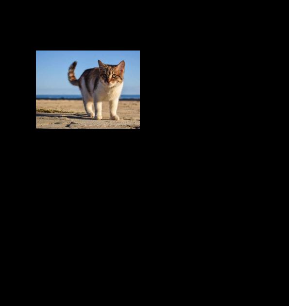 Contoh Teks Hasil Observasi Tentang Kucing Terkait Teks