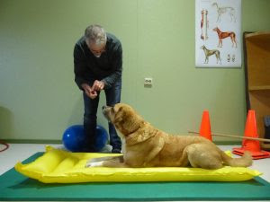 exercícios cães de competição