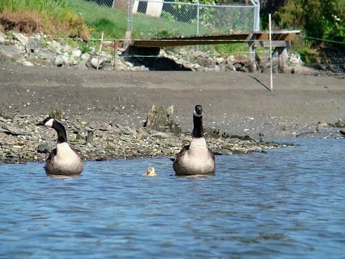 2008-05-04 Portage Inlet 424
