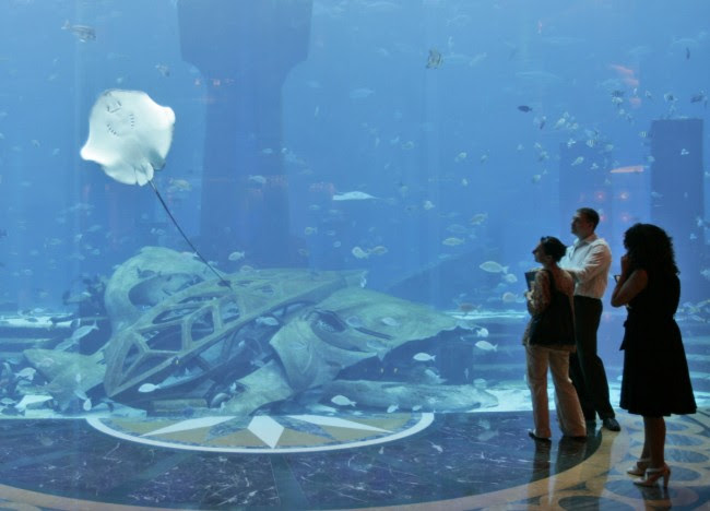 Enlarge hotel dubai. Water pleasure: Journalists watch a stingray swimming