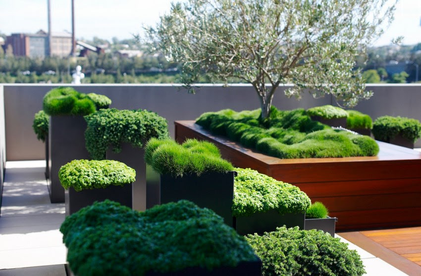 Create Your Own Urban Oasis with Plants