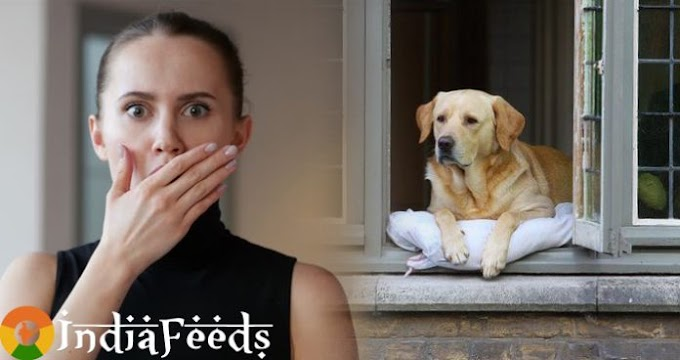 एक कुत्ता रोज़ खिड़की से बाहर देखता रहता था, फिर मालकिन को पता चली यह विचित्र बात