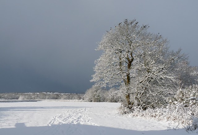 23752 - Pontlliw in the snow