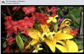 Natural Plant pigments