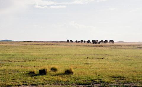 Elefantei