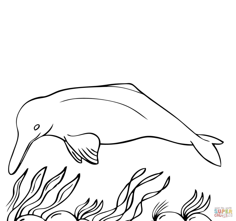 Amazonasdelfin · Tümmler from Delfine