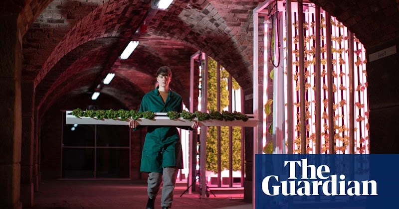 'This is the farming of the future': the rise of hydroponic food labs | Environment | The Guardian