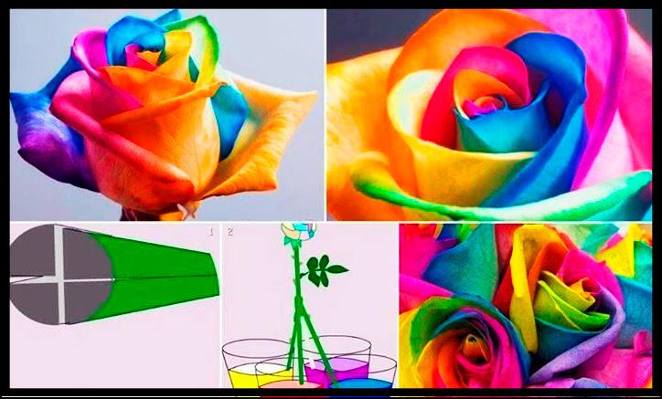 Cómo Hacer Rosas De Colores