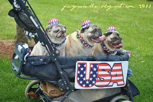 patriotic_pugs
