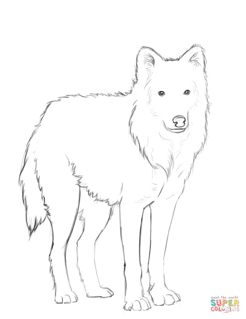 Dibujos De Lobo Para Colorear Páginas Para Imprimir Y Colorear Gratis