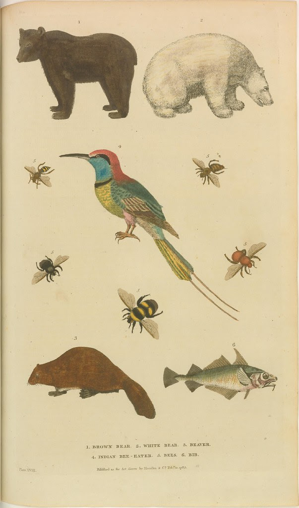 Bears, beaver, bird, bees, and fish - in colour from 1785