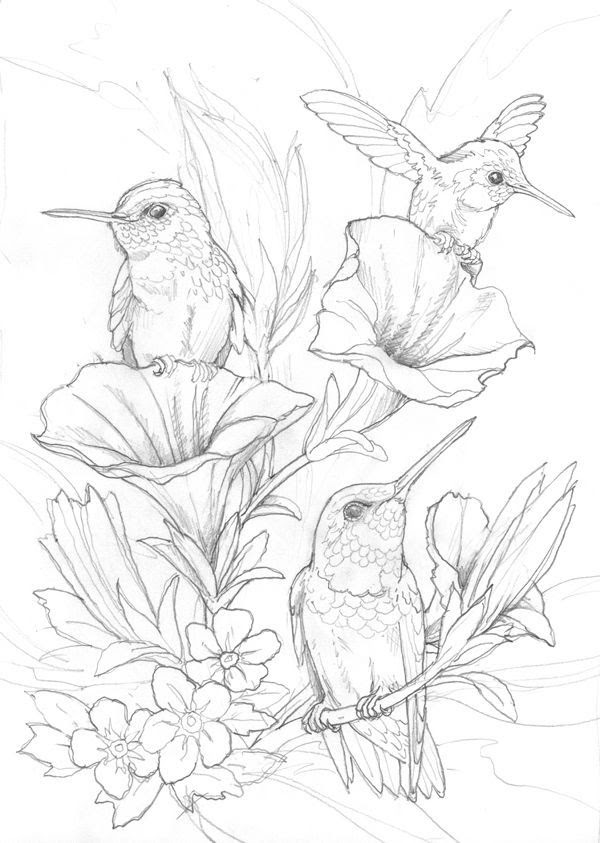 Hummingbird Drawing Free at GetDrawings | Free download