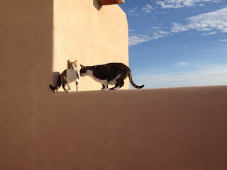 Cats on the wall