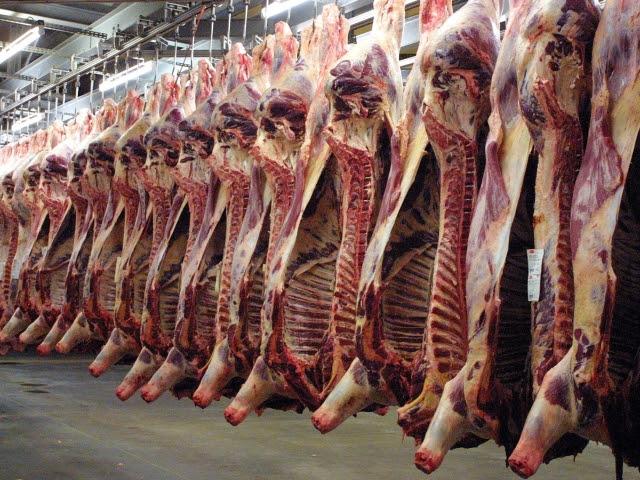 http://vigilancehallal.com/wp-content/uploads/2012/10/abbatoir-non-halal.jpg