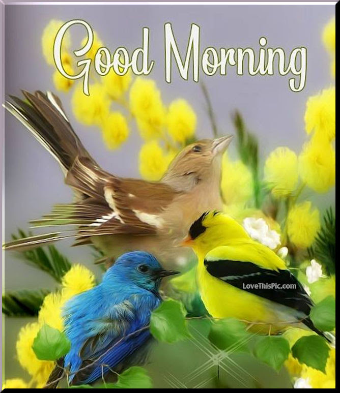 Birds And Flowers Good Morning Wishes Pictures Photos And Images