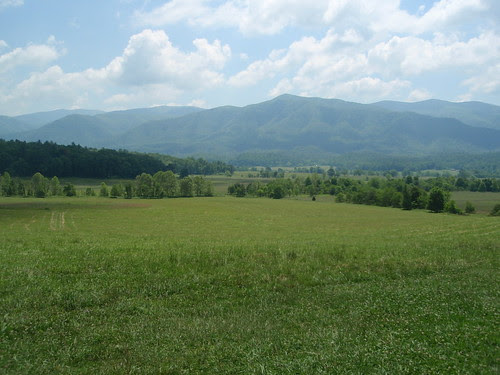 cade's cove meadows (2)