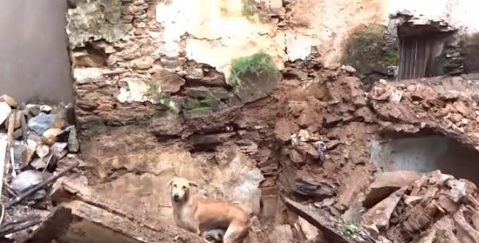 Madre guía a los rescatistas y no para de ayudarlos a cavar hasta salvar a sus bebés enterrados