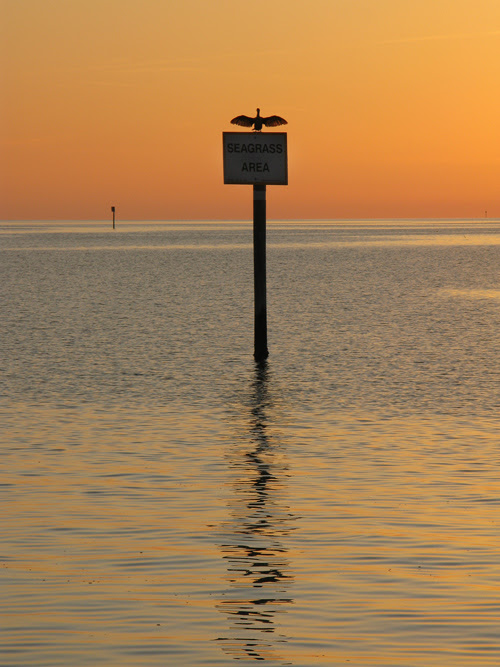 a bird dries its wings during sunset on the Gulf of Mexico, Florida