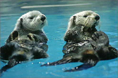 ラッコと会える水族館web水族館