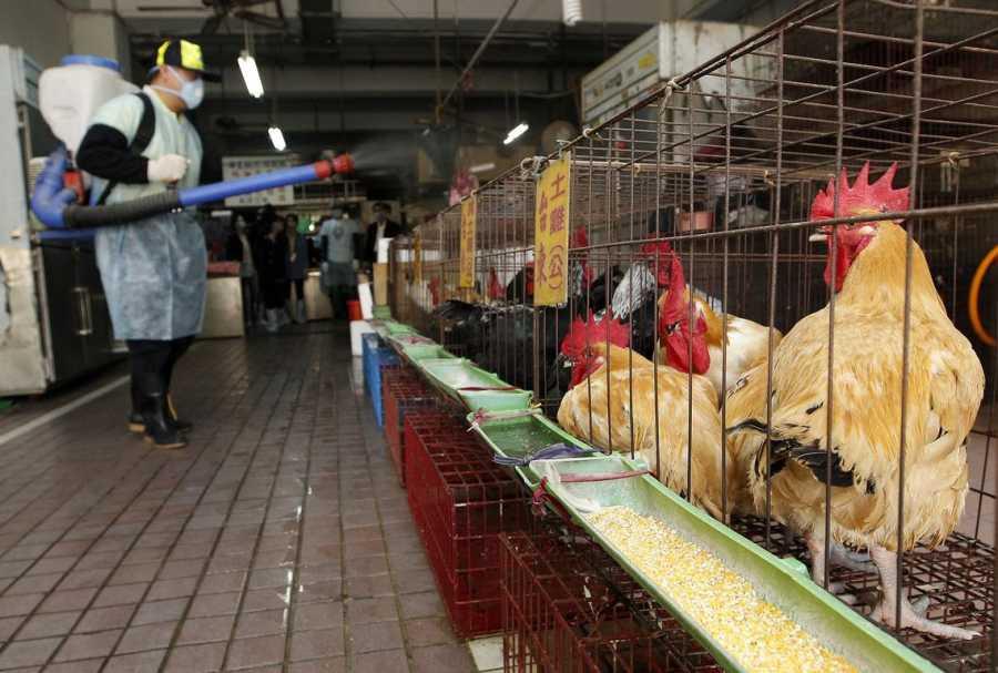 Δήμος Δέλτα: Ενημέρωση πτηνοτρόφων και κατόχων οικόσιτων πουλερικών γα τη γρίπη των πτηνών