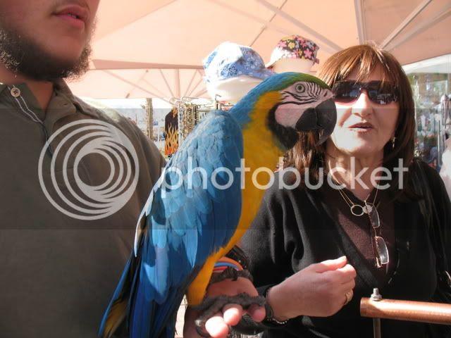 Parrot in Eilat