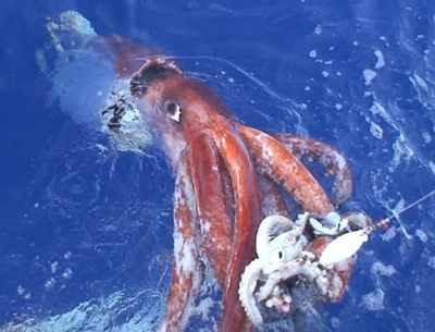 061222-Giant-Squid-1
