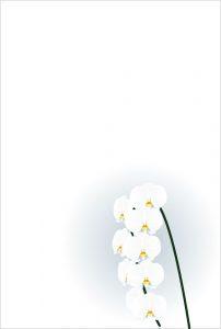 胡蝶蘭柄 喪中ハガキのマナー 蘭すぐnet ブログ