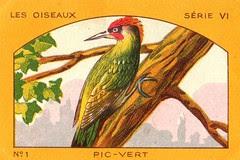 milliat oiseaux003