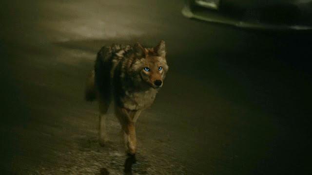 Resultado de imagem para Teen Wolf season 6