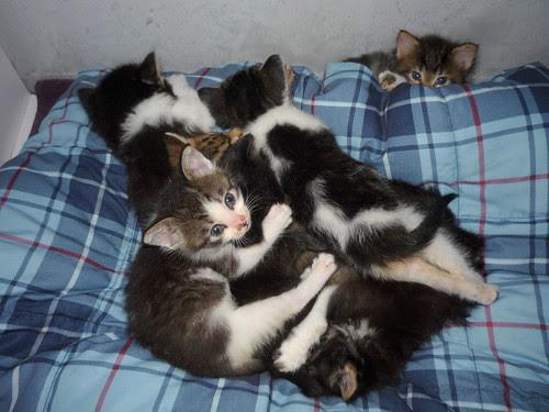 7 Babies