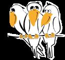 Corbeaux blancs
