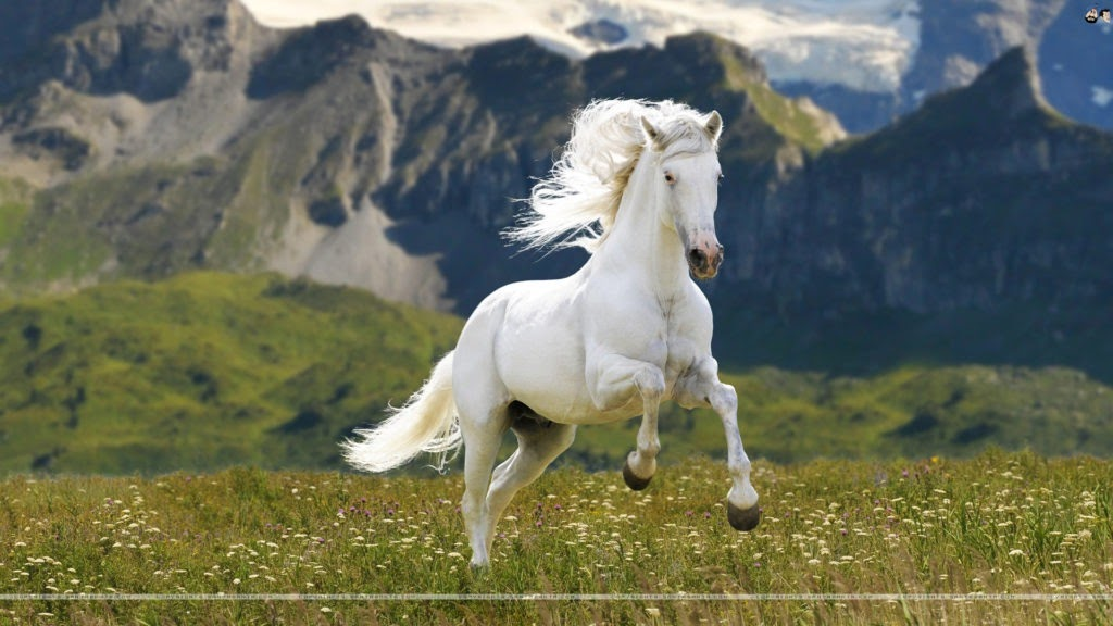 White Horse Iphone Beautiful Horse Wallpaper White Wallpaper