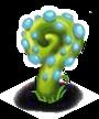 Planta Caracol azul