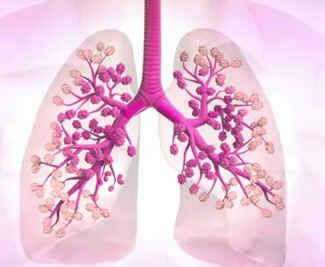 Akciğer Nasıl Soluk Alır Ve Verir