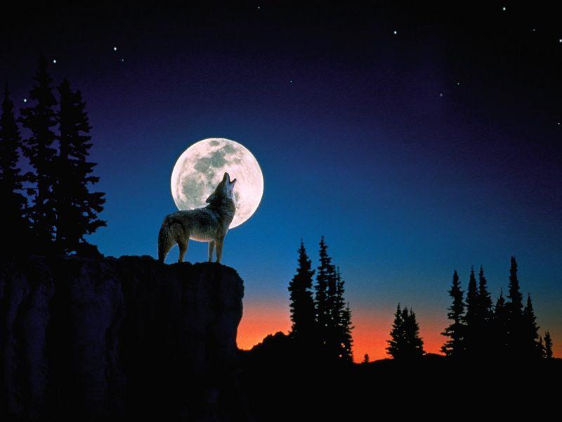 Fondos De Pantalla De Lobos Aullando A La Luna Fondos De Pantalla