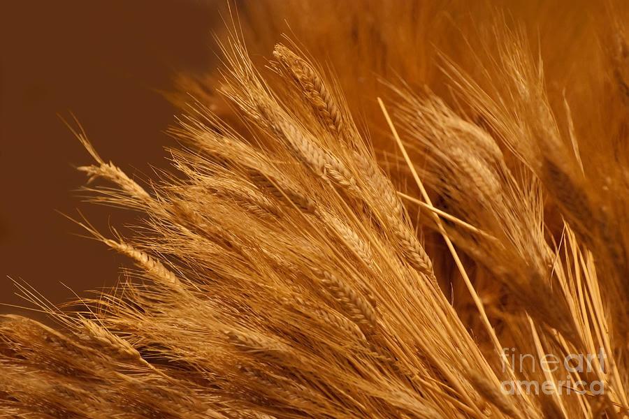 http://images.fineartamerica.com/images-medium-large/wheat-noel-zia-lee.jpg