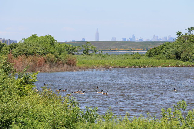 June 27 Jamaica Bay Wildlife Refuge