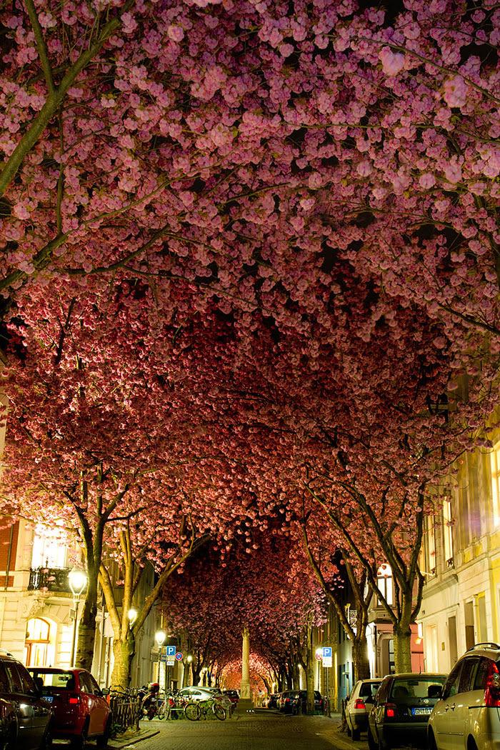 calles-arboles-flores (4)