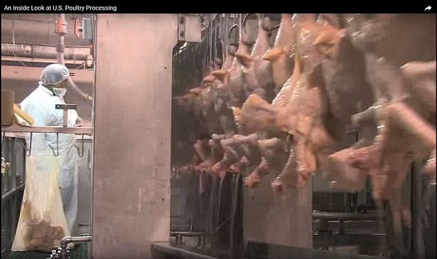 Cette image montre que les poulets sont broyés dans du chlore dans une ferme aux États-Unis