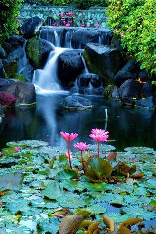 Unduh 88 Wallpaper Bunga Lotus Hd HD Paling Keren