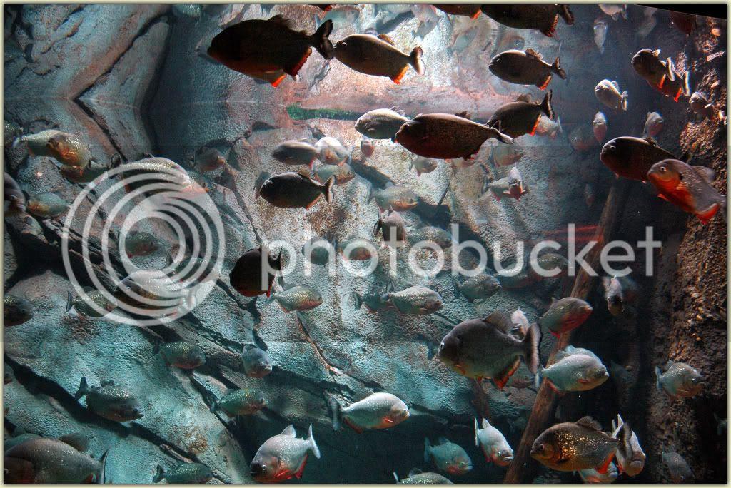 Fishies 09