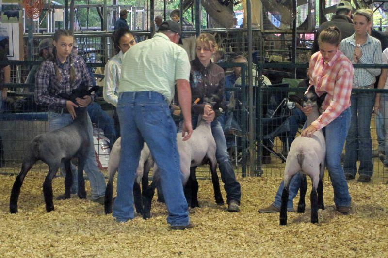Polk County Fair 11