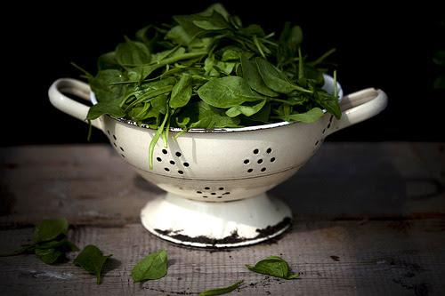Eerste spinazie uit eigen tuin by -Berta…- #flickstackr  Flickr: http://flic.kr/p/nfAc63