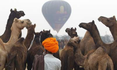 A camel herder wearing a turban arrives with his camels at the Pushkar Fair in Rajasthan