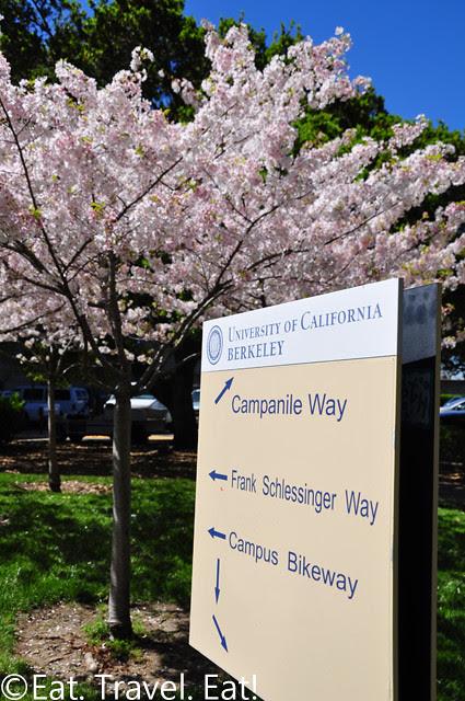UC Berkeley, Berkeley, CA- Sign + Flowers